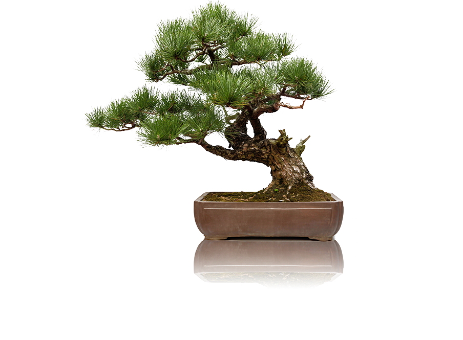 pr_taichichih_bonsai